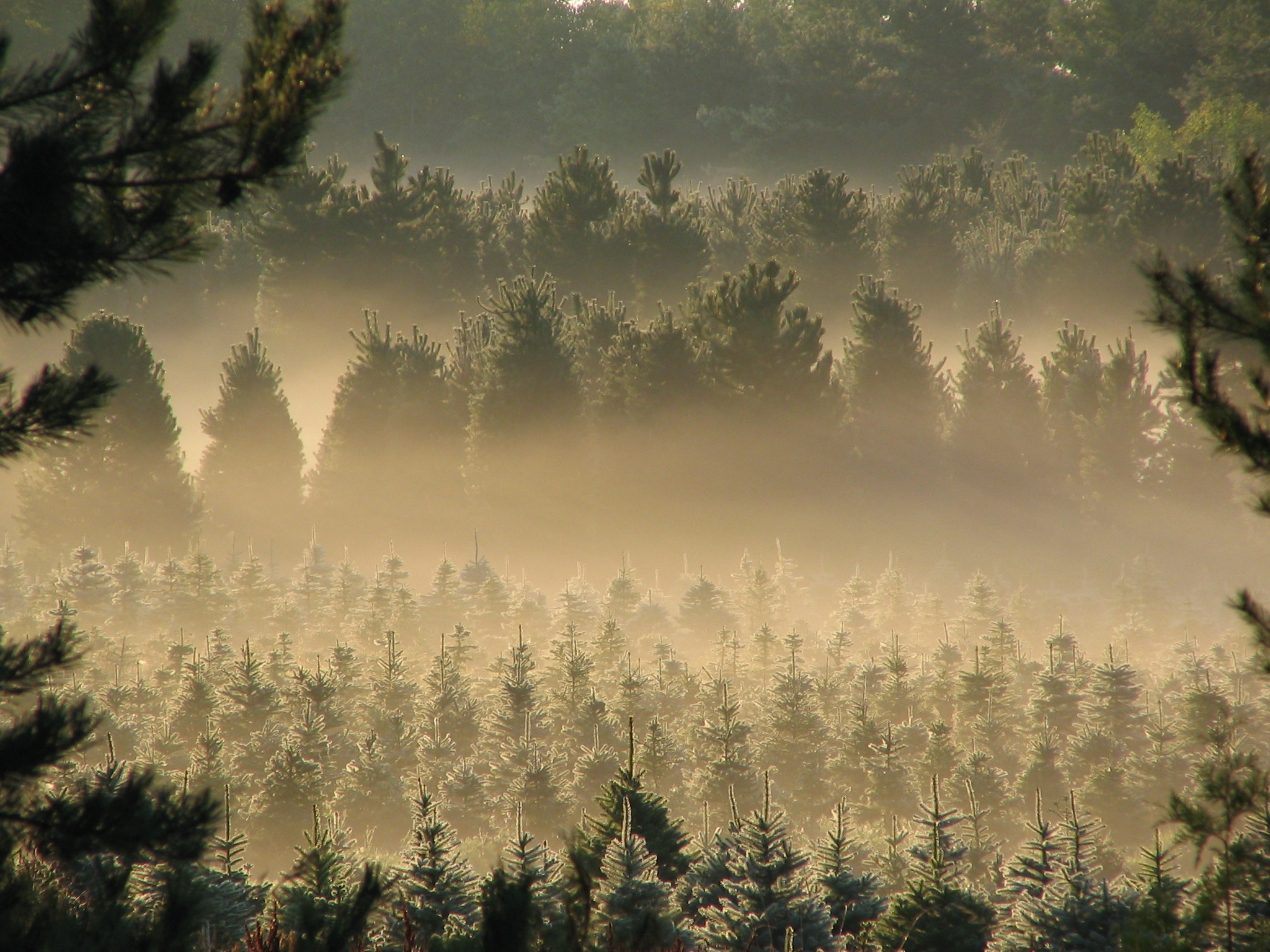 How to start a Christmas tree farm on the side, set your own hours ...