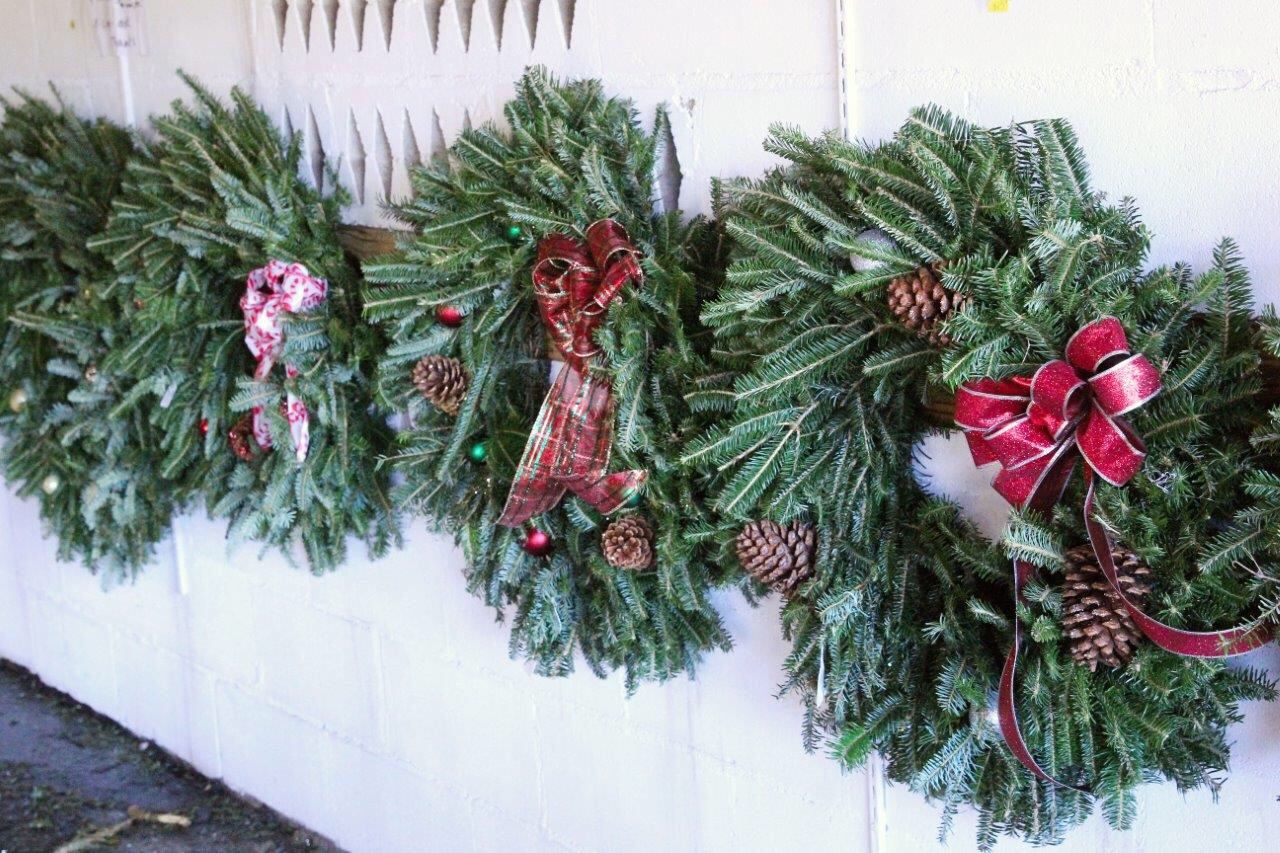How To Start A Christmas Tree Farm On The Side, Set Your