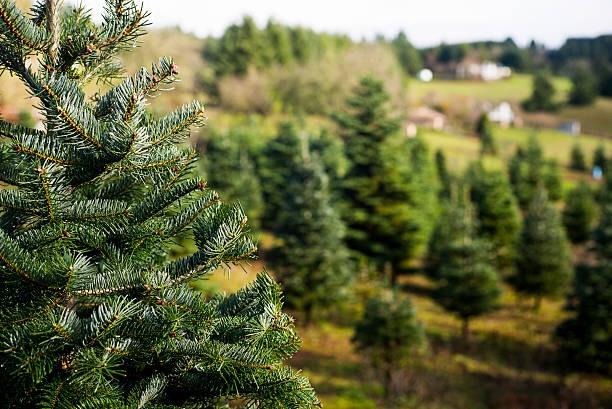 that jolly into paying off the credit cards or paying your mortgage off early follow these simple steps and learn how to start a christmas tree farm